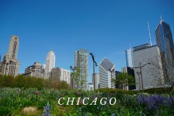 Chicago's Best Architecture River Cruise: Perfect for the First-Time Visitor