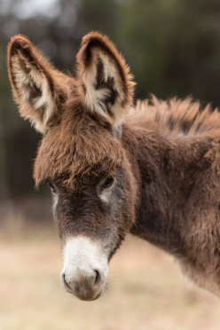 If There Were More Donkeys, Our World Would Be Much Better