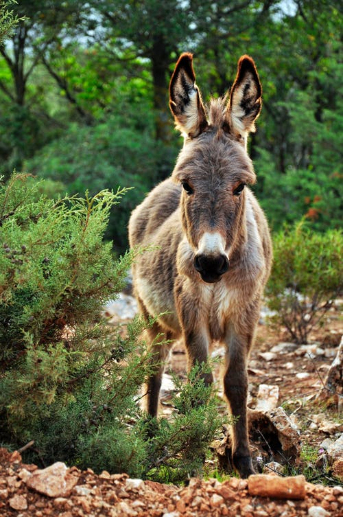 The Donkey Is Arguably The Most-Loyal Animal In The World.