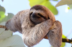What Makes a Sloth a Sloth?