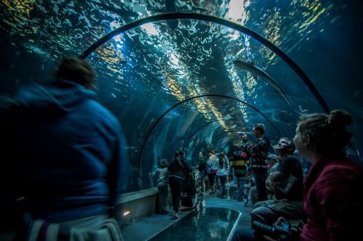 Man-made Aquarium
