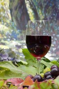 Red Wine and Its Health Benefits for Moderate Drinkers