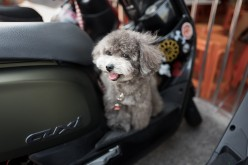 Do I Need to Buy Special Pet Travel Gear When Flying With My Dog?