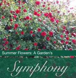 Flowers and Weather: Summer Garden Photos