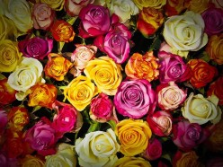 Rose Color Meanings: What's Your Rose Language Trying To Say?