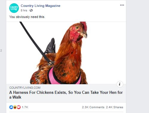 You can harness your chicken