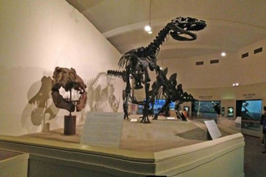 Jurassic Period dinosaurs on display at the MSU Museum
