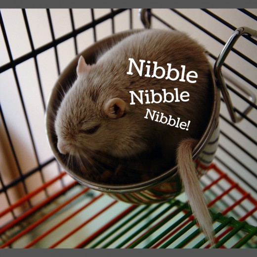 Gerbils like eating nuts, seeds, fruits, and vegetables.