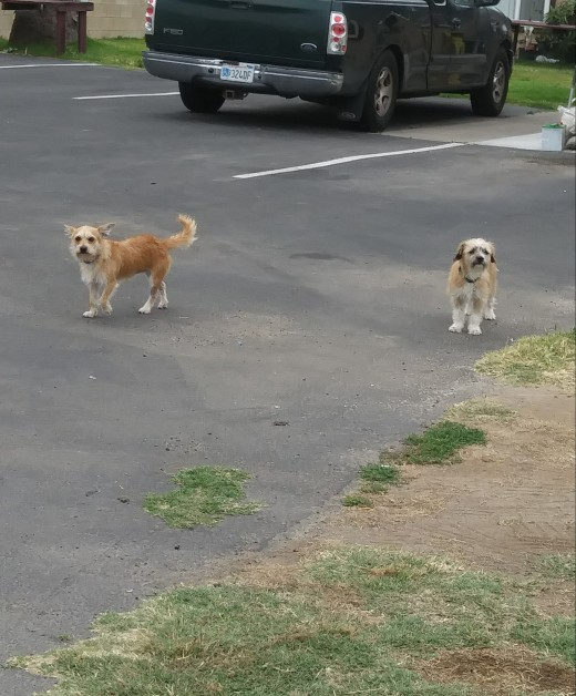 These shaggies like to bark out of boredom. Are they just kidding?