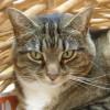 NJMom profile image