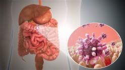 Key Information About Gastroenteritis