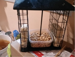 Bird Watching: Modified Suet Feeder With Nut or Seed Box