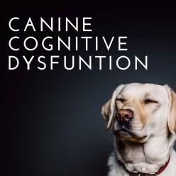 Dog Dementia: Also Known as Doggie Alzheimer's Disease