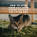 Four Reasons Why Your Cat Is Peeing Outside the Litter Box and How to Stop It