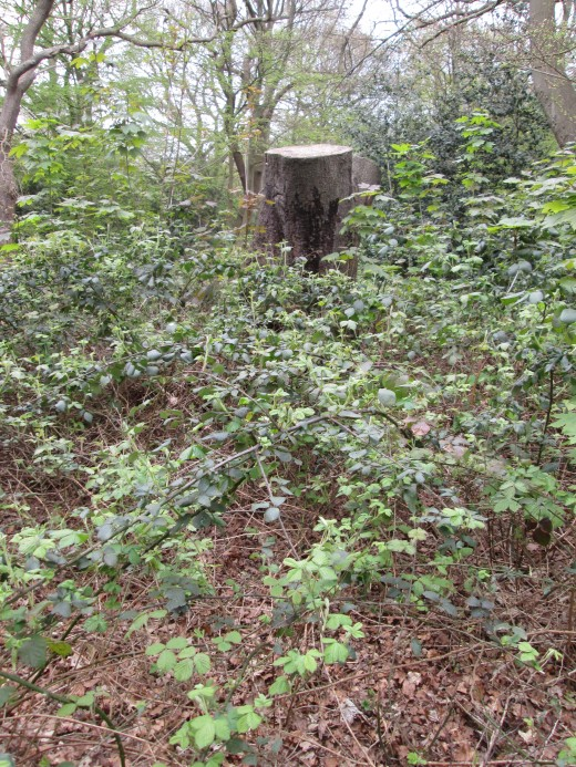 A sawn-off tree trunk stands amid encroaching thorns and other occupants that have 'annexed' the territory