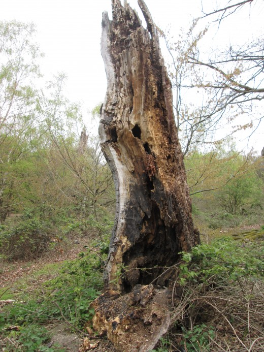 Assorted flora and fauna have taken over this blighted tree trunk in the same area.