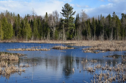 Typical wetland habitat of Rose Lake State Wildlife Research Area