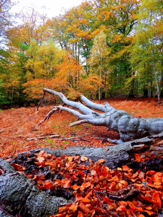 Reds dominate! No, the Cold War hasn't resumed, it's autumn in the forest