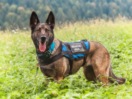 German Shepherd Rescue Dog