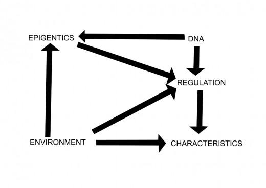 Illustration 1: Interaction between genetics, environment and epigenetics
