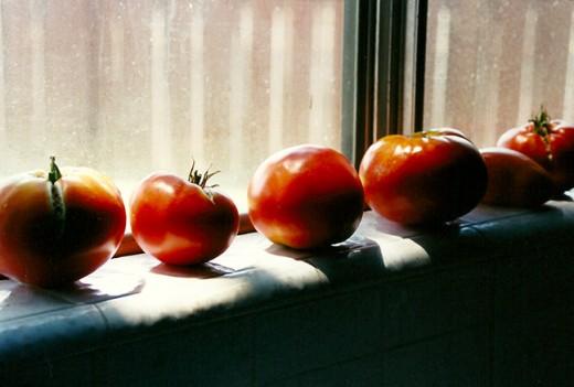 Window Tomatoes