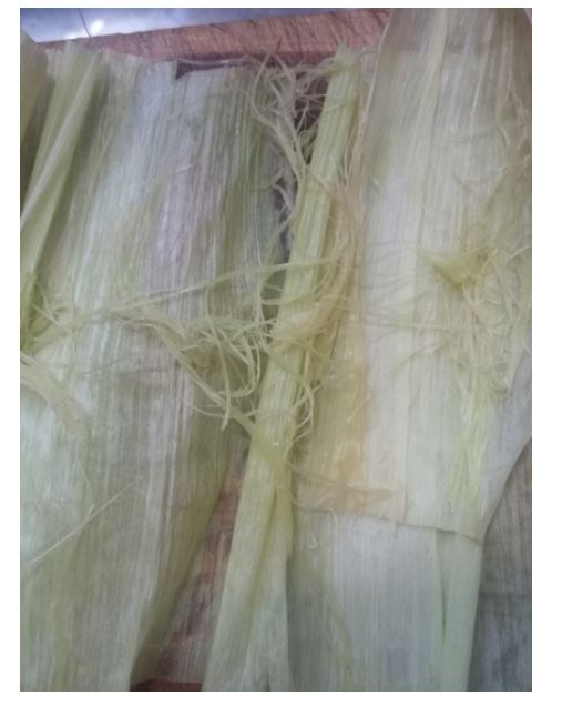 see how silk is still attached to husk?