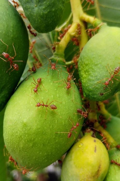 10 Florida Bugs That Bite or Sting