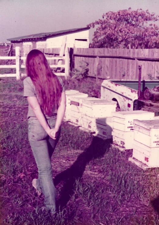 My dad's bee boxes and hard-working bees.