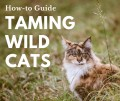 How to Tame a Wild Cat