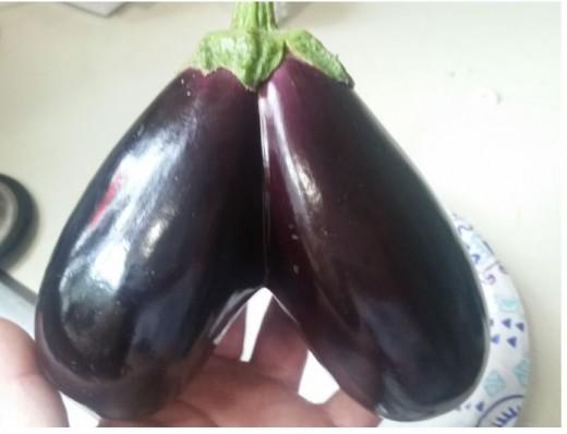 A unusual Double eggplant