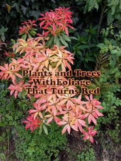 Plants and Trees With Foliage That Turns Red
