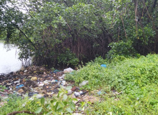 Plastic litter pollution haunting mangrove forests
