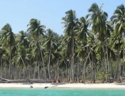 Evergreen Coconut Communities - Growing Tourist Attractions