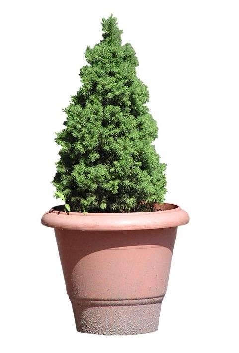 Brilliant pot plant idea from morguefile.com.