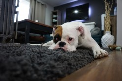 Dog Depression: Signs, Causes, and Treatments