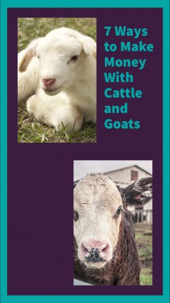 Seven Ways to Make Money with Cattle and Goats