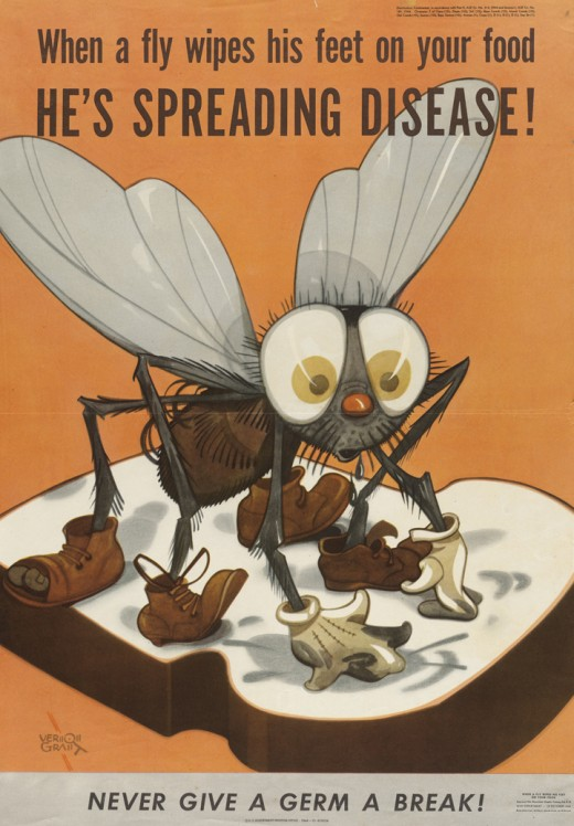 Keep flies away from your food to prevent germs from contaminating it.