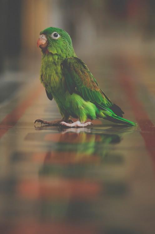 A beautiful parrot
