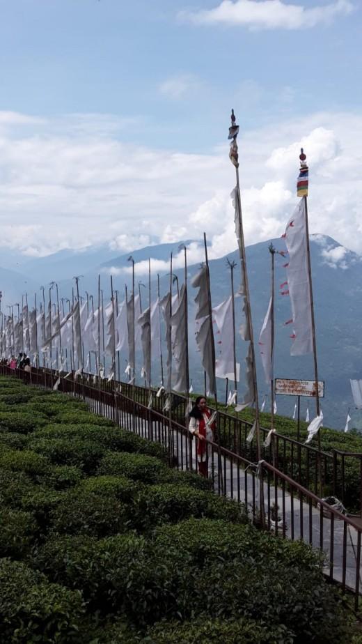 The breathtaking view of Temi Tea Garden
