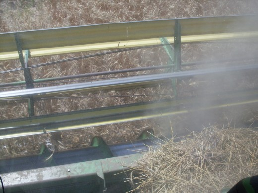 The yellow blades of the header push the wheat into the sickle bar, which cuts the stalks of wheat in two. An auger then feeds it into the interior of the combine, where it is threshed to separate the grain from the straw and chaff.