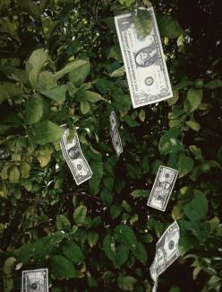 Small Business Loan & Grants