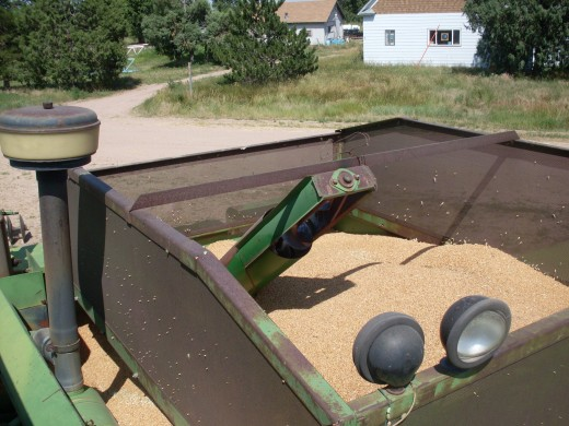 Now we begin emptying the holding tank on the combine.