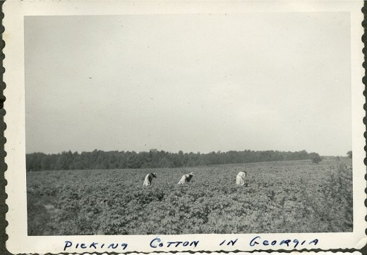Cotton picking in 1943 in Georgia.