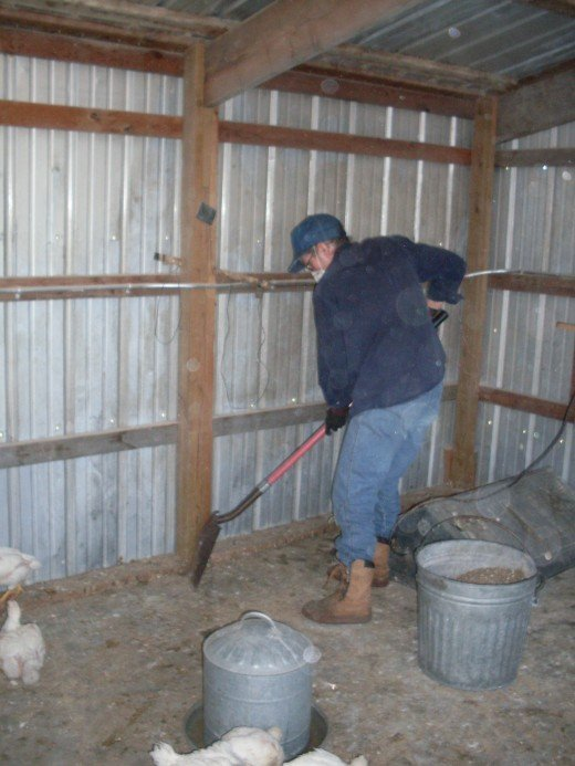 Miss Heather must now clean their house about ever 36 hours. She uses the manure in her garden compost pile.