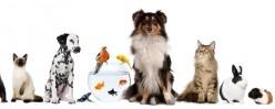 Pet Sitting as a Side Hustle