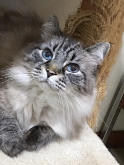 Rescues/Shelters Taking FIV Cats