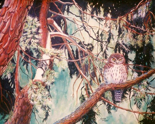 """Watercolor """"The Pigmy Owl"""""""