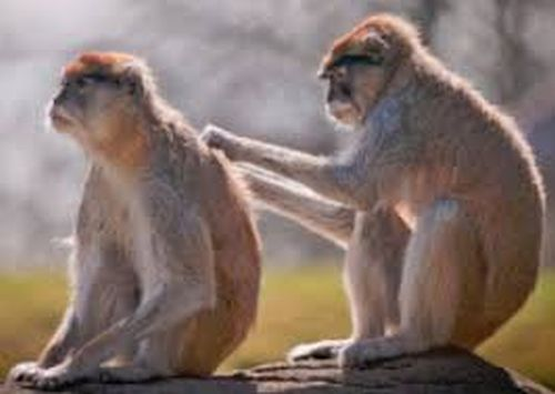 Animals scratching each other backs. That's because it is difficult to scratch your own back but easy for someone else to do it.