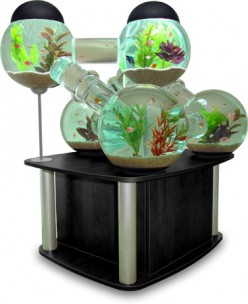 How to Go About Setting Up Perfect Fish Tanks