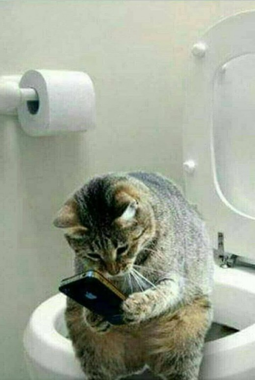 Soon your cat will be sitting on the toilet strolling down through facebook ~ leaving you to doing the p p dance